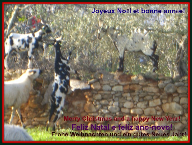 Christmas Goats in the Algarve