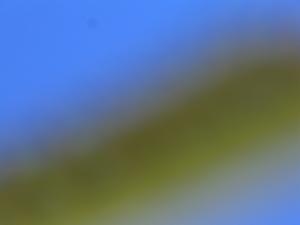 Blurry caterpillar, bright blue sky, clueless photographer