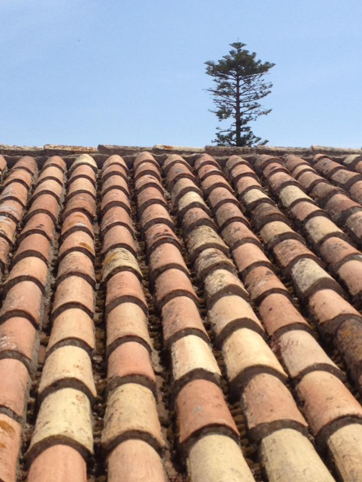 roof and tree