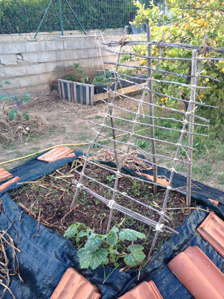 Strange trellises of the odd kind